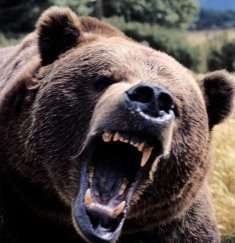 Bear in a angry mood,