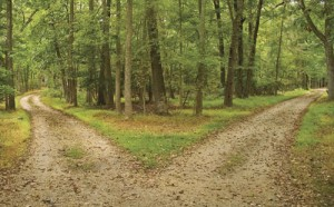 Image of two roads merging in the woods representing making minful choices and well-being.