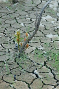 Flowers growin in dry cracked ground representing persistence