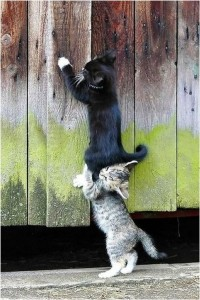 Two cats working together as an example of humility.