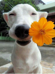 Photo of small white dog with orange flower laugh at life